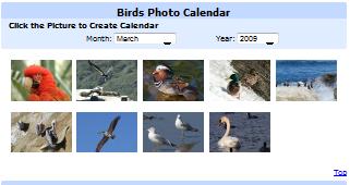 Birds Photo Calendar.png